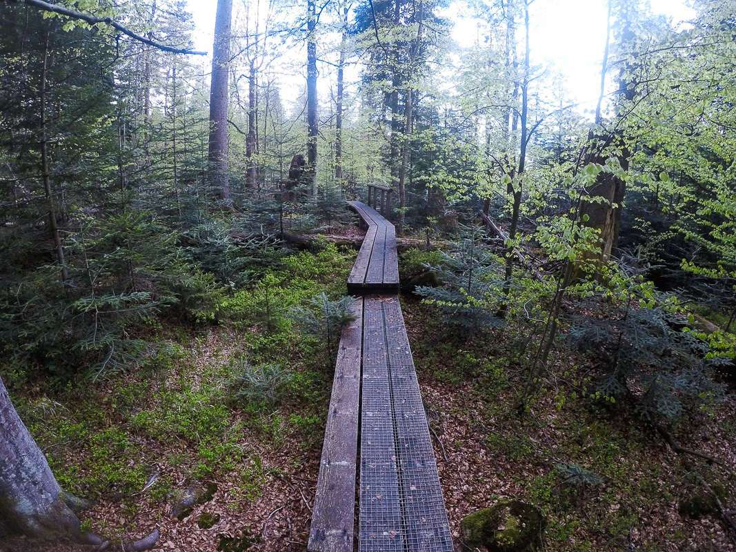 Wanderung Achtsamkeit und Wildnis